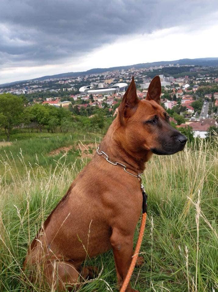L-ați văzut pe Posh? Recompensă 2.000 de euro pentru cine îl aduce acasă!
