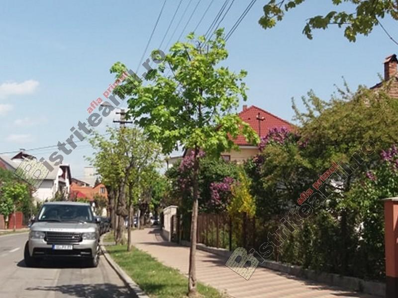 Rostul de dimineață: Uimitor și exploziv, pe străzile din Bistrița…