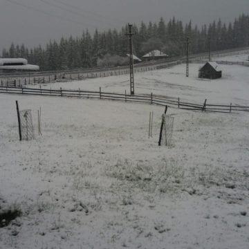 """FOTO/VIDEO – """"Zăpada mieilor"""" la Tihuța! Tărâmul lui Dracula a fost acoperit cu nea în plină primăvară"""