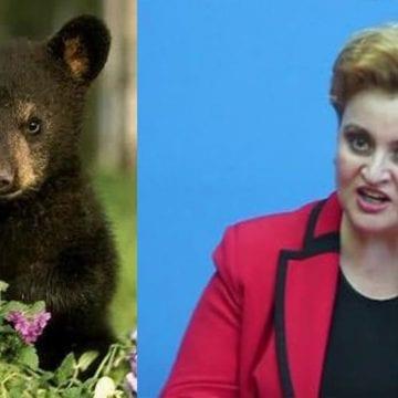 Verzii: Ursul e mai inteligent ca un ministru de mediu din România
