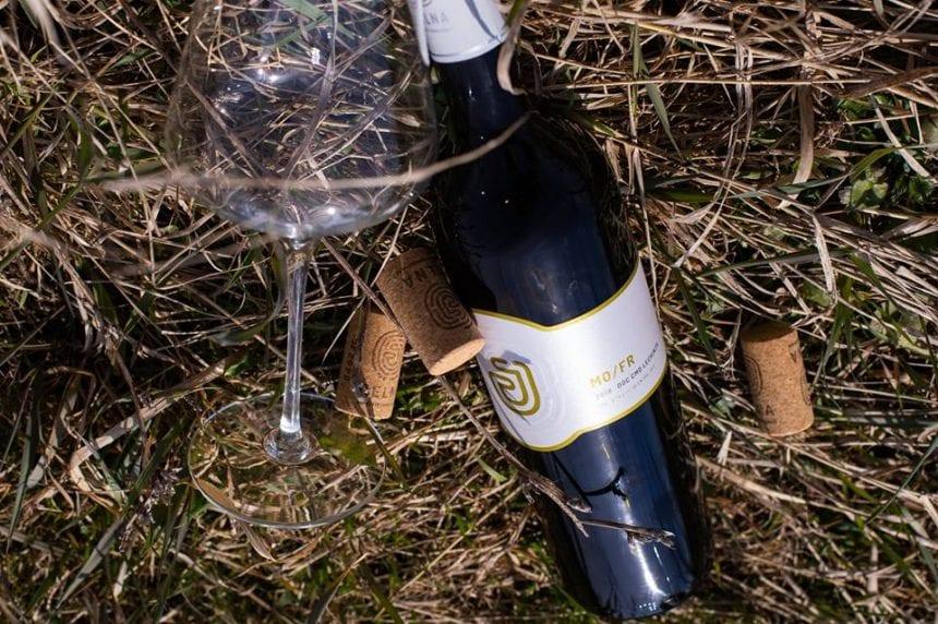 EXCELENT! Strugurii care dau naștere vinului de Jelna, singurii cu certificat de produs montan