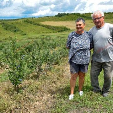 FOTO/VIDEO: Impresionanta poveste a doi oameni frumoși și a plantației lor de afine
