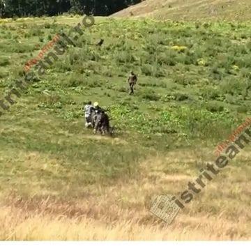 Au fost reţinuţi ciobanii care au snopit ieri în bătaie un belgian, la Colibiţa