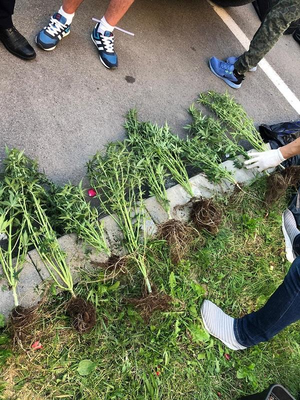 OFICIAL: Câte kilograme de canabis au fost descoperite ieri asupra celor doi tineri bistrițeni
