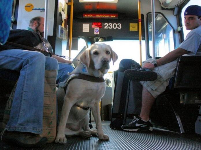 Un câine i-a adus o amendă firmei de transport public Transmixt. Cum a fost posibil