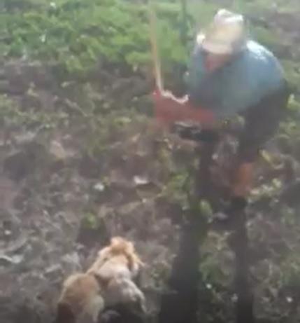 VIDEO CRUNT: Un bărbat aproape omoară în bătaie un câine!