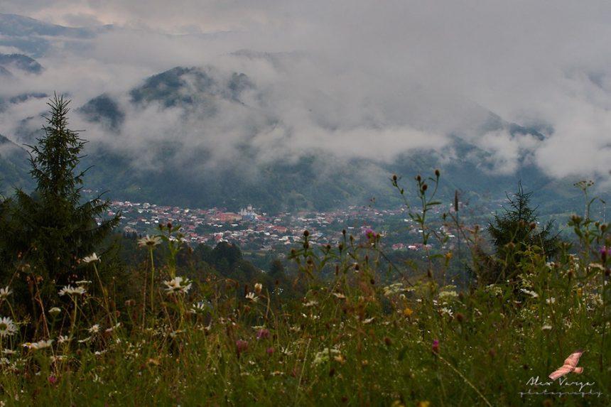 FOTO/VIDEO. O muncă titanică, o lucrare de anvergură: Constantin Svoboda, despre flora din Bistriţa-Năsăud
