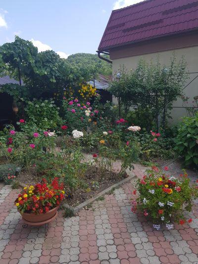 START VOT! Alege balconul sau grădina cu flori ce-ți place cel mai mult!