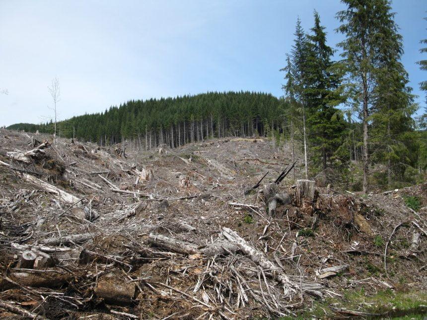 Istrate Ștețco, șeful Gărzii Forestiere Cluj, confirmă jaful din pădurea dintre Sângeorz-Băi și Maieru
