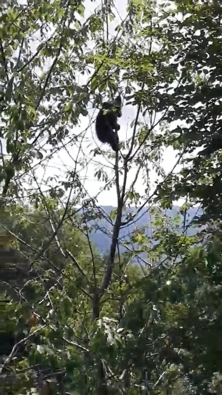 Cum au ajuns vânătorii să aștepte și câte două luni să împuște urșii care fac ravagii în satele bistrițene