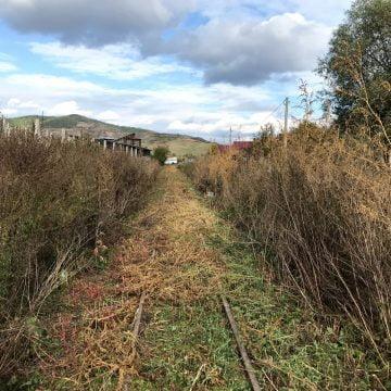 """VIDEO: """"Spaima ambroziei"""", la plimbare pe șinele Mocăniței Transilvaniei"""