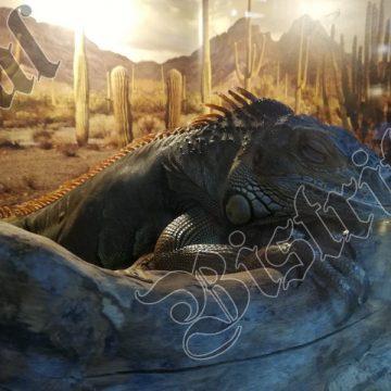 FOTO/VIDEO: Singura colecție de reptile vii din țară, pentru prima dată la Bistrița!
