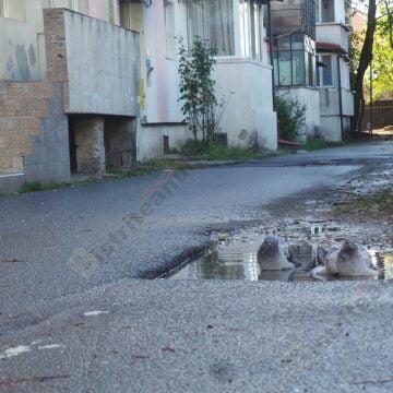 Rostul de dimineaţă:  Când nu ai baie acasă, te mulţumeşti şi cu balta din spatele blocului…