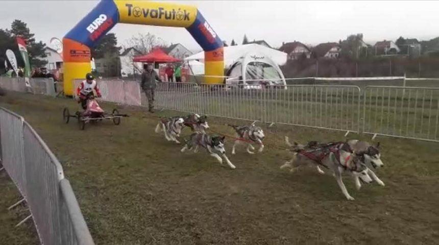 FOTO: Bistriţenii şi câinii lor, pe podium, în Ungaria, după prima manşă a Campionatului European de atelaje