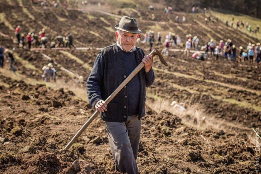 VIDEO Testul timpului: Cum arată pădurile plantate de Tășuleasa Social în urmă cu 5 ani