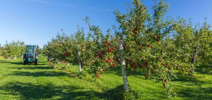 Livezile cu pomi fructiferi, barieră împotriva urșilor