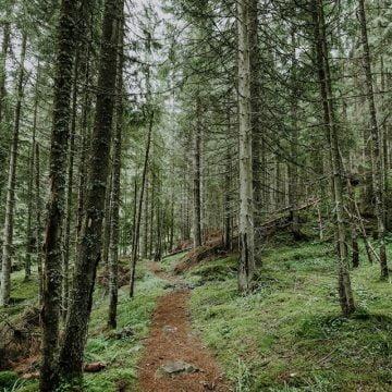MARŞUL pentru păduri, duminică şi la Bistriţa!