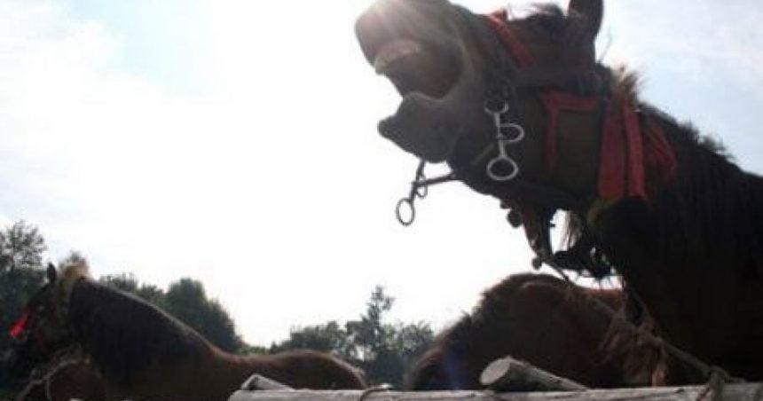 FOTO/VIDEO: Elicopterul SMURD chemat pentru a prelua un bărbat lovit de cal