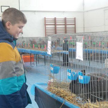 VIDEO: Iepuri cu ochi roşii şi spectaculoase specii de porumbei, de admirat într-o şcoală din Bistriţa!
