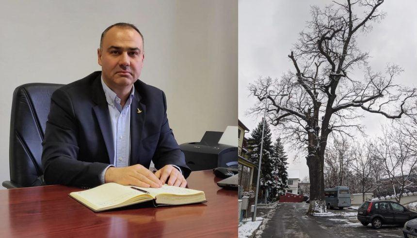 Cristian Niculae – Drept la replică privind stejarul din fața Hotelului Codrișor