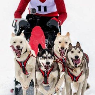 """Concursul internațional de sănii trase de câini """"Drumul Romanilor"""" se amână"""
