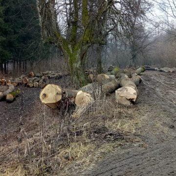 FOTO/VIDEO – JALE: A dispărut o pădure de stejari din Arcalia! 40 de hectare rase în două luni