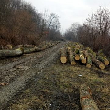 Garda Forestieră Cluj:  NU sunt tăieri ilegale la Arcalia