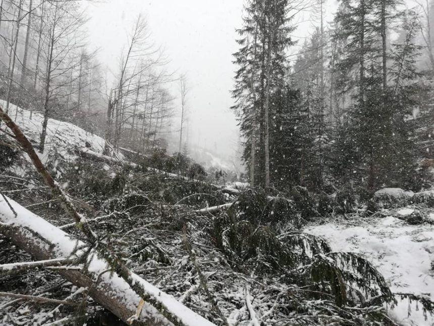 FOTO: Vântul a făcut prăpăd în Munții Rodnei! Valea Anieșului, blocată!