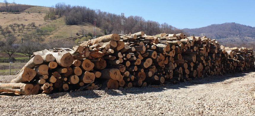Amenzi ISTORICE pentru giganți ai lemnului din județ, pentru trucarea licitațiilor