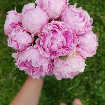FOTO: Buchete de flori cu bujori și hortensii, de la Euforia Floral Boutique. Le poți comanda și on-line!