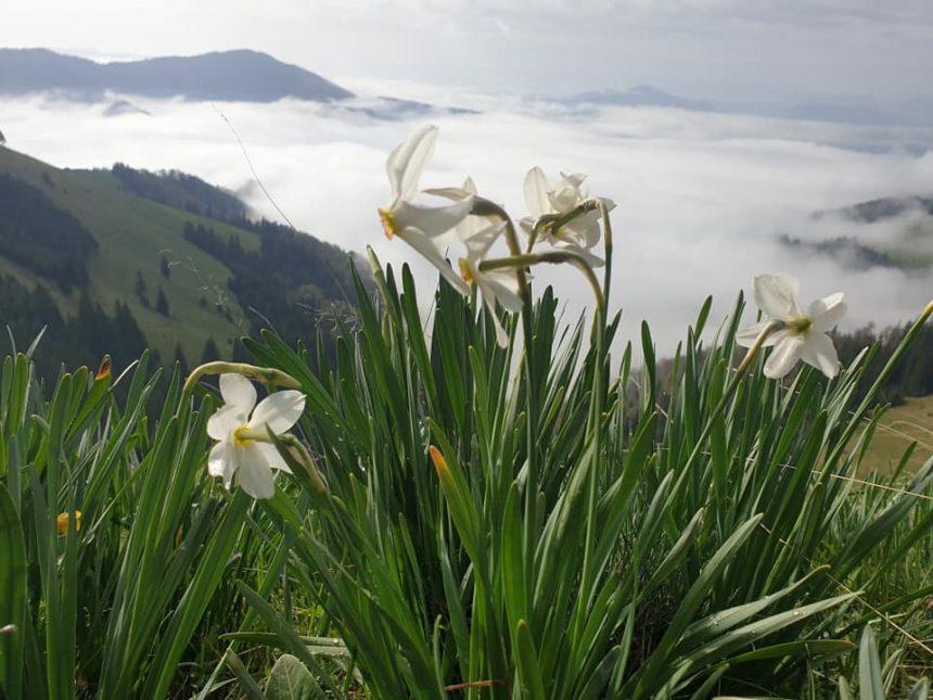 Rostul de dimineață: Peisaj de basm cu narcise și vipere, lenevind la soare…