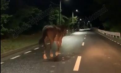 VIDEO: Doi cai frumoși, noaptea, pe DJ 172 C