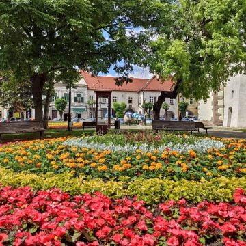 Doris Rai: Serele primăriei pot aduce turiști și bani Bistriței! Am putea fi Orașul Florilor și să producem flori pentru tot Ardealul, cel puțin