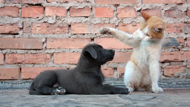 TREI zile de sterilizări gratuite pentru câinii și pisicile din Bistrița!