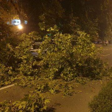 FOTO: La un pas de tragedie! O creangă s-a rupt din senin dintr-un copac și a blocat Bulevardul Independenței