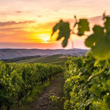 O nouă secțiune de întrebări și răspunsuri cu privire la producerea vinului de casă din mustul de Jidvei pe site-ul mustdejidvei.ro