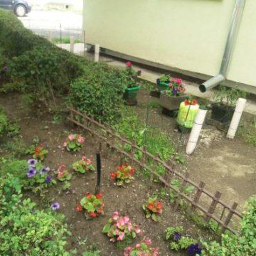 Îl mai facem o dată fericit pe Attila, cel cu căruciorul verde? Votați-i grădina din concursul Bistrița Verde!