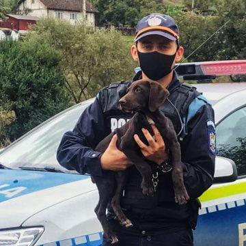 Felicitări! Polițiștii au găsit-o pe Lassie,  cățelușa furată a unei femei din Teaca