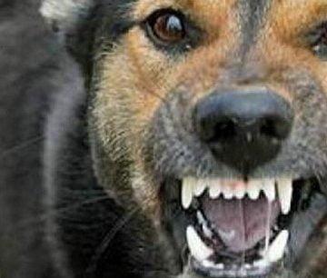 Dosar penal, după ce un câine a mușcat o minoră și pe un bărbat