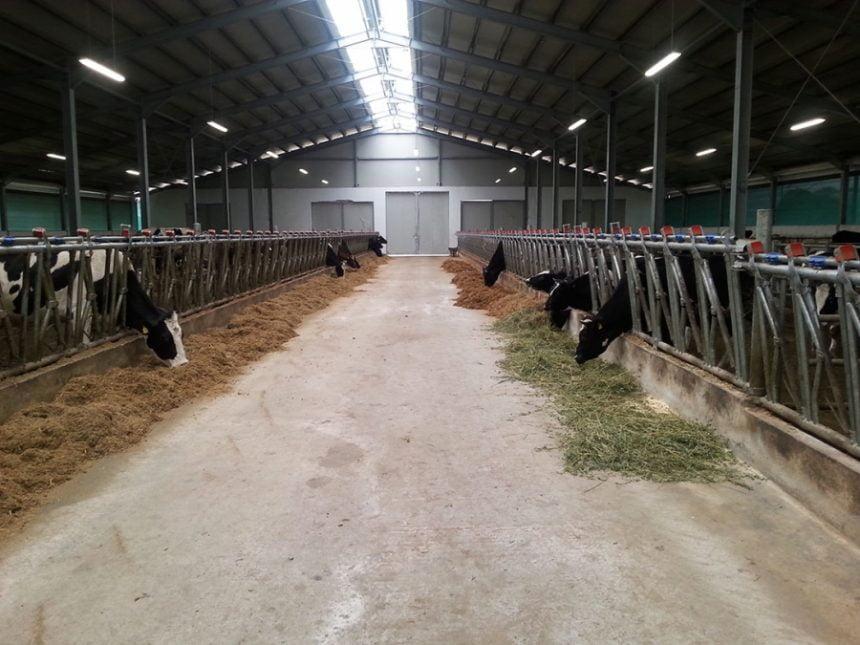 Zootehnia din județ, la pământ! Fermierii își scot fermele la vânzare pe OLX