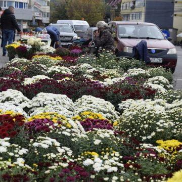 Rostul de dimineață:  Au dispărut trotuarele cu totul, înghițite de flori… Mii de flori, aliniate ca sarmalele colorate