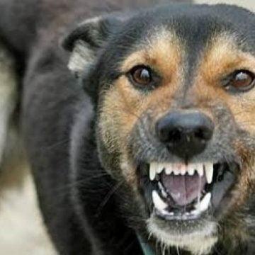 Și-au lăsat câinii nesupravegheați și au fost amendați