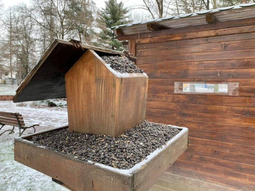 Nu omorâți păsările încercând să le hrăniți! CE puteți face pentru a le ajuta să treacă peste anotimpul rece: