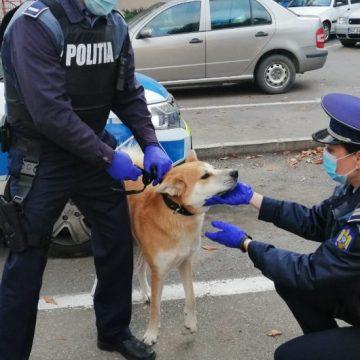 Poliția Animalelor a început în forță: Două dosare penale pentru schingiuirea unor câini!
