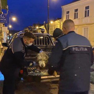 FRUMOS: Doi polițiști au oprit traficul pentru a salva un cățel rănit