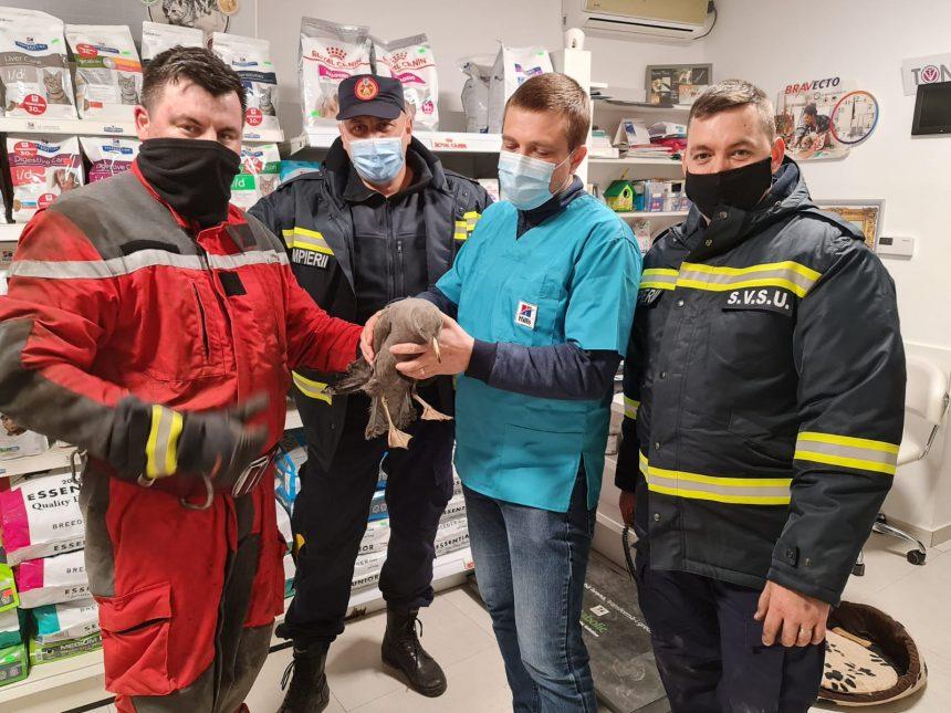 Misiune INEDITĂ: Un pescăruș salvat de voluntari și îngrijit cu drag de veterinari
