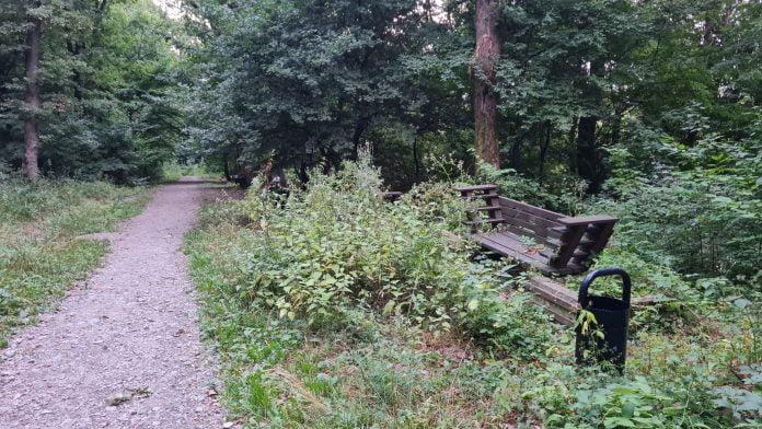Pădurea Schullerwald