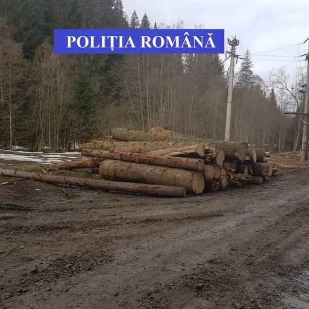 Au transportat lemn și au ieșit cu o gaură în buget
