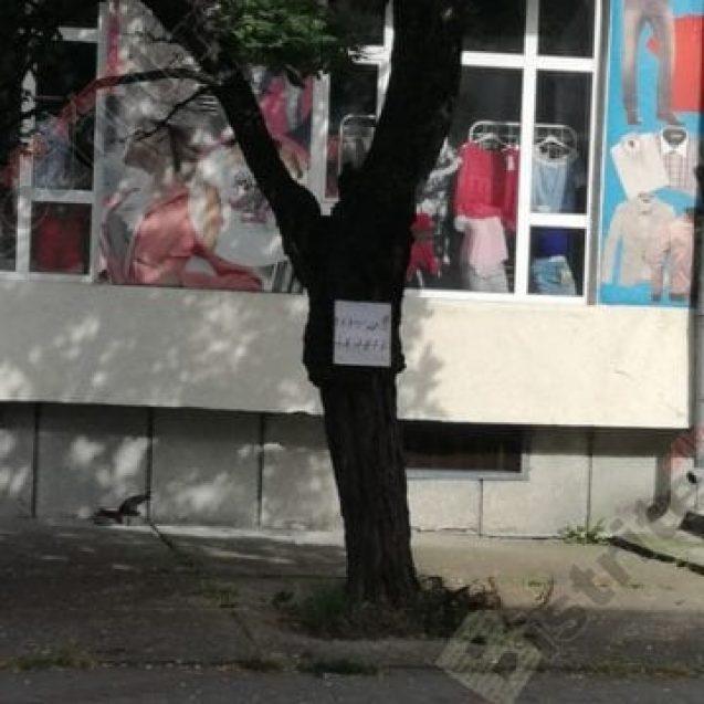 Rostul de dimineață:  Mesaj de intimidare, la adresa infractorilor de rang înalt, pe o stradă din Bistrița!