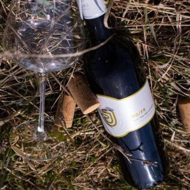 VIDEO.  Cea mai frumoasă poveste despre Crama Jelna! Când vinul transformă un trecut sumbru într-un viitor luminos